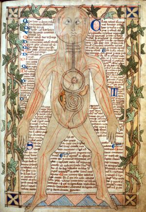 Ανατομική απεικόνιση των φλεβών του ανθρώπου, Αγγλία, τέλη 13ου αιώνα.
