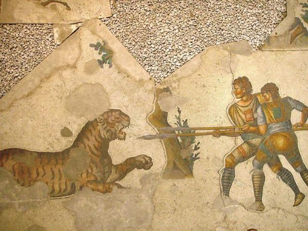 Δύο venatores πολεμούν μ' έναν τίγρη, όπως απεικονίζεται σε μωσαϊκό του 5ου αιώνα στο Μεγάλο Παλάτι της Κωνσταντινούπολης